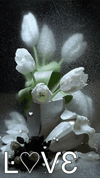 love white tulips pictures   images