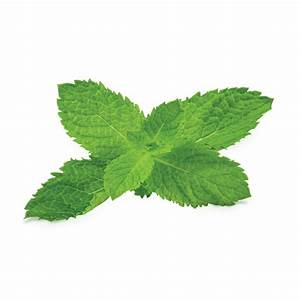 Mint Leaf Png | www.imgkid.com - The Image Kid Has It!