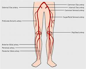 Arteries Of The Lower Limb       Bmj Com  Content  345
