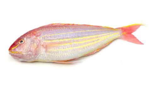 fish threadfin bream enquiry
