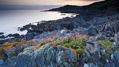 Bing Bull Point Devon England Flowers Harding