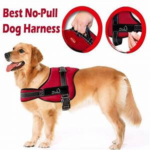 Best No-Pull Dog Harness