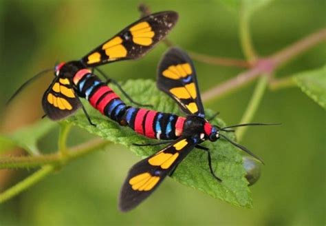 colorful insects colorful insects
