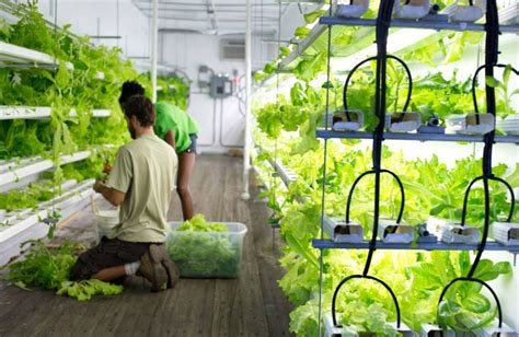 Stony Brook Installs Hydroponic 'freight Farm' On Campus