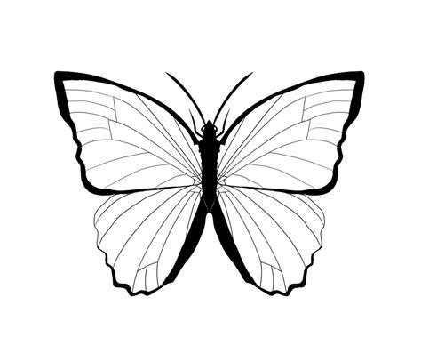 morpho butterfly cliparts   clip art  clip art  clipart library