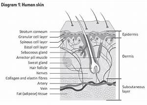 Skin Facts For Beautiful Skin  U2013 Joliee Skin