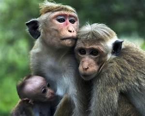 Humor-Funny-Pics: Funny Monkey Pic desktop wallpaper