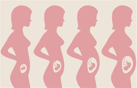 pregnancy trimesters huggies