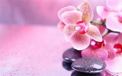 Spa Orchids Zen Orchid Pink Flowers Stones