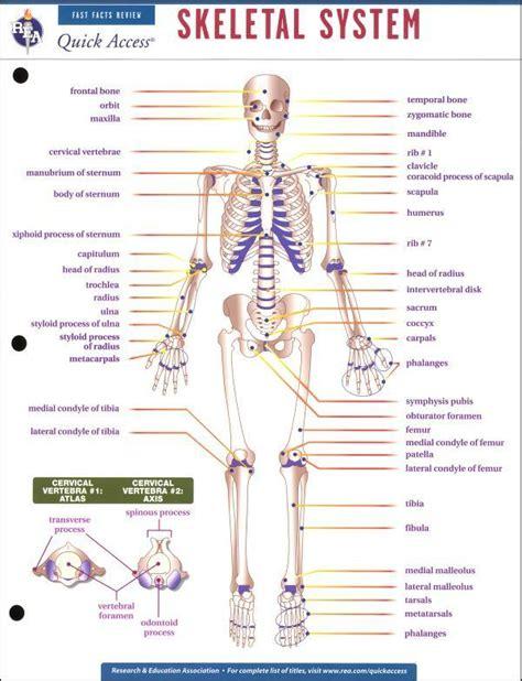 skeletal system worksheet high school worksheets human skeletal system