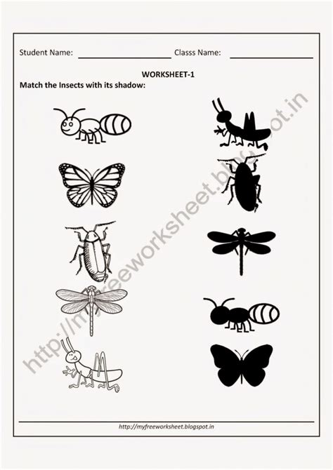 kindergarten science worksheets chapter worksheet mogenk