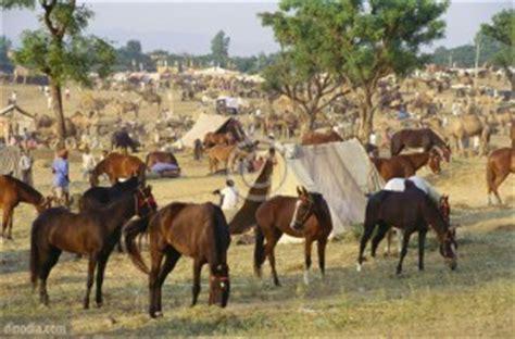 scanty rain  hit animal husbandry sector  rajasthan