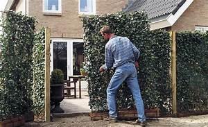 Wann Pflanzt Man Hortensien : wann darf ich hecke schneiden hecke schneiden der richtige zeitpunkt plus schritt f r schritt ~ Yasmunasinghe.com Haus und Dekorationen