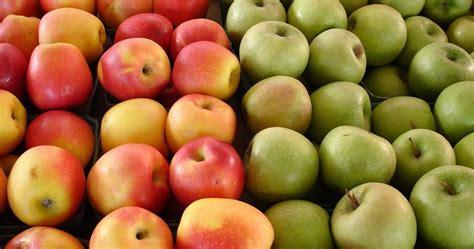 Mencegah Orang Hamil Manfaat Dan Khasiat Buah Apel Bagi Kesehatan Tubuh Tips