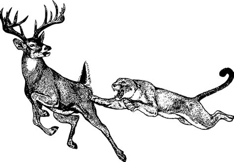 deer mountain clipart   cliparts  images