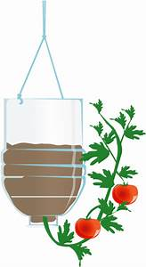 Cómo cultivar tomates boca abajo ECOagricultor