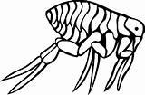 Coloring Flea Pages Bugs Animal Bug Cartoon Printable Animals Sheet sketch template