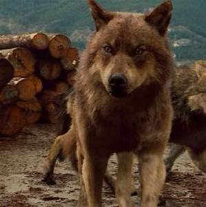 Jacob Black the wolf | Tribu Quileute | Pinterest | Pack ...