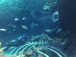 Aquarium Berechnen : sea life kansas city aquarium 35 fotos kunst kultur ~ Themetempest.com Abrechnung