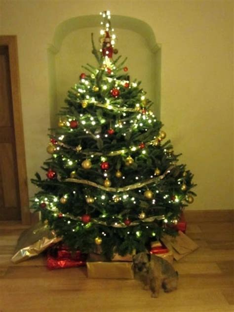 real christmas trees glasgow real christmas tree decorated real trees decorated real 4259