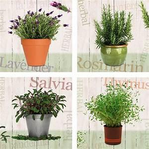 Lavendel Pflanzen Kaufen : leinwandbild home affaire lavendel rosmarin salbei ~ Lizthompson.info Haus und Dekorationen