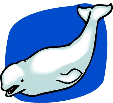 Beluga Whale Simple Clipart