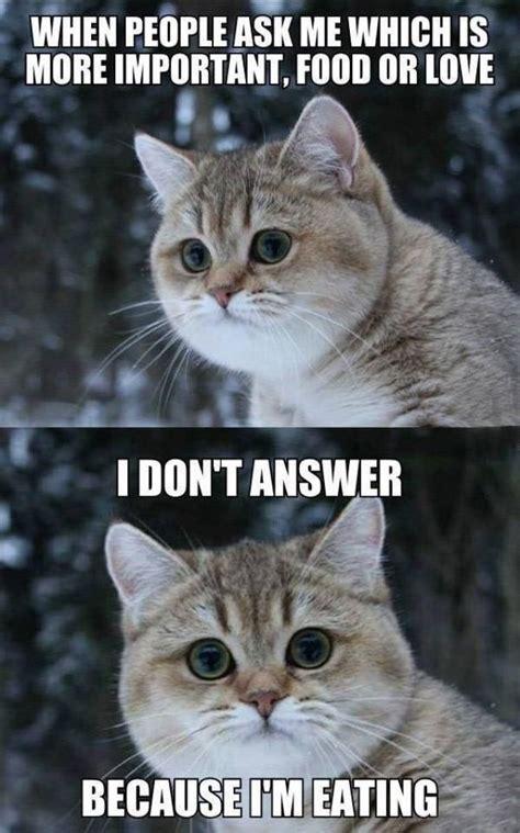 I Love Food Meme - best 25 food meme ideas on pinterest funny food memes funny food jokes and funny jokes
