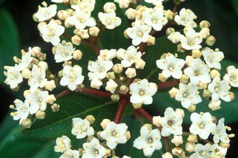 fiori profumati invernali 10 piante da esterno e tipi di fiori resistenti al freddo