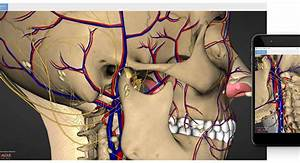 The Best 3d Anatomy Software To Use For Human Body Research