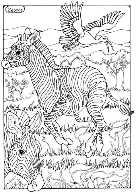 zebras colouring page  dandi palmer horse coloring pages