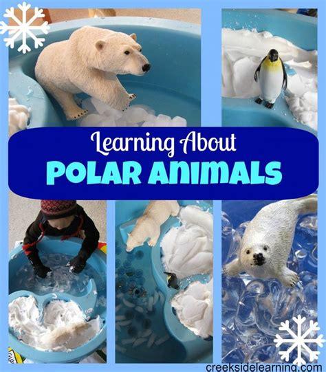 17 best polar bears images on day care fleece 577 | b3f20b88a791515546fe2decba9616fa polar animals preschool curriculum