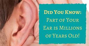 Part Of Your Ear Is Millions Of Years Old