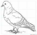 Pigeon Drawing Draw Coloring Rock Step Pigeons Pages Printable Drawings Bird Tutorials Dove Outline Supercoloring Beginners Java Finch Flight Easy sketch template