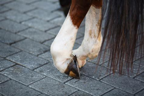 erste hilfe beim pferd alles  du wissen musst