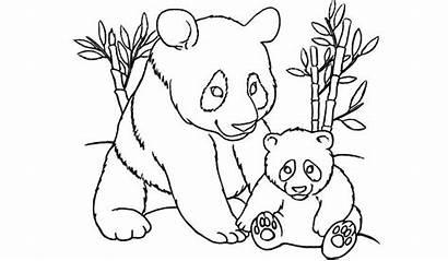 Panda Coloring Pages Printable Bear Colouring Pandas