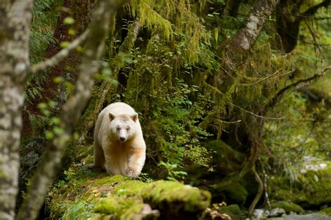 North America Temperate Forest Animals