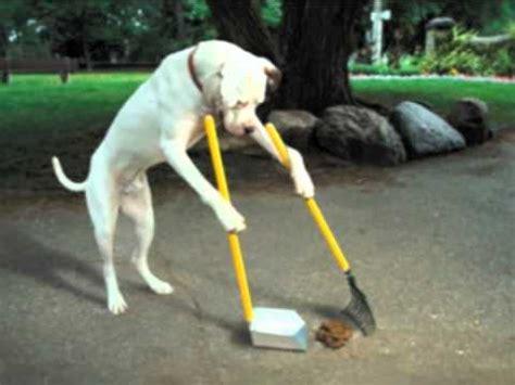 dog  pooper scooper  clean   mess youtube