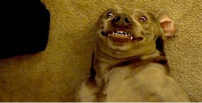 Funny Dog Trending Animals Gifs Via