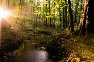 Forest landscape tree sunlight sunshine beautiful water ...