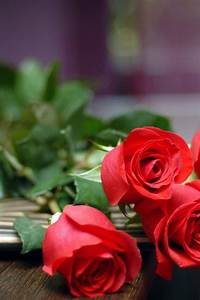 Red roses on table HD wallpaper HD Latest Wallpapers