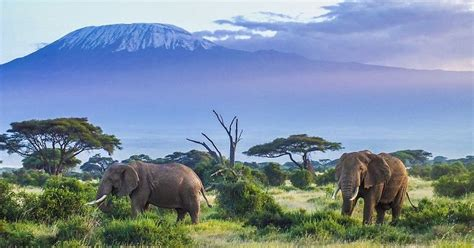 highest mountains  tanzania worldatlascom