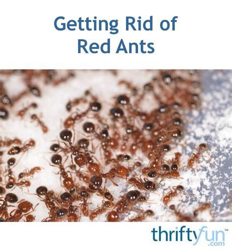 rid  red ants thriftyfun