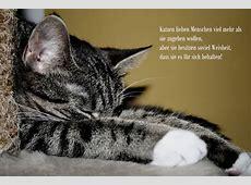Katzenweisheiten! Foto & Bild tiere, haustiere, katzen