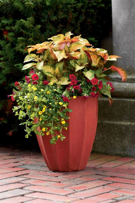 container gardens   lovely gift  mom  mother