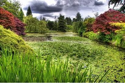 Pond Botanical Water Lilies Garden Wallpapers Vandusen