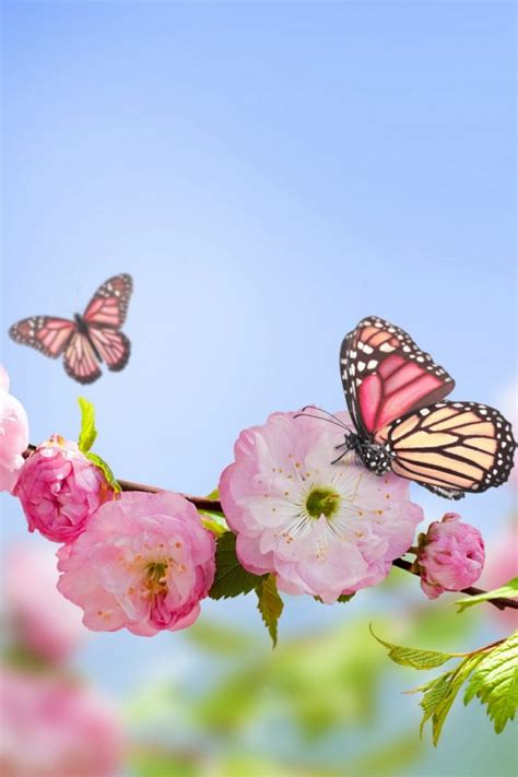 Animated Butterfly Wallpaper For Mobile Phone - butterfly wallpaper for phone on wallpaperget