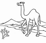 Camel Coloring Pages Desert Camels Oasis Printable Outline Through Drawing Clipart Caravan Deserts sketch template
