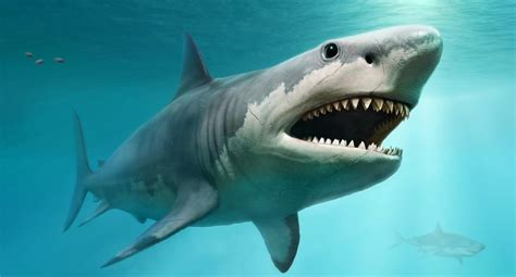 Giant ancient sharks had enormous babies that ate their ...