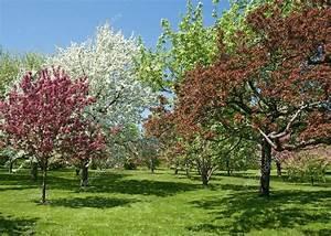 Schöne Bäume Für Garten : sch nen fr hling b ume in voller bl te stockfoto goodmoodphoto 22338157 ~ Eleganceandgraceweddings.com Haus und Dekorationen