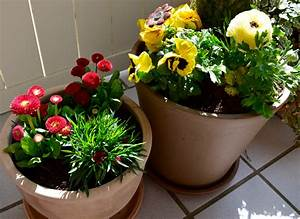 Kübelpflanzen Für Terrasse : terrassengestaltung leicht gemacht tipps f r balkon und ~ Lizthompson.info Haus und Dekorationen